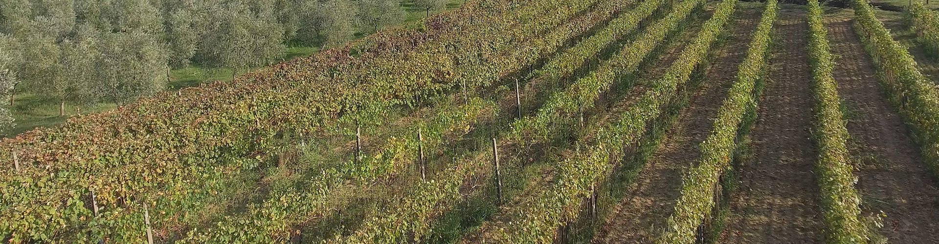 Chianti-Montalbano-DOCG