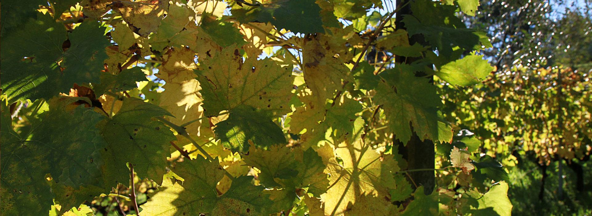 Lamporecchio: Olio, vino e sapori antichi