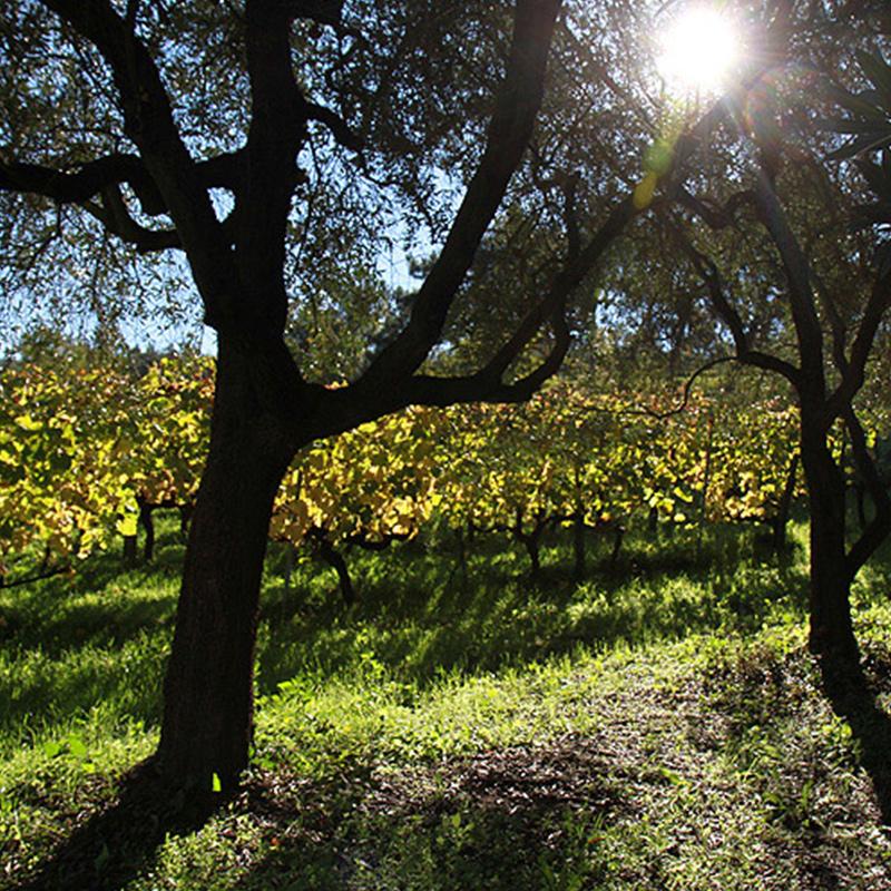 Cerbaia Mastromarco Montalbano Toscana